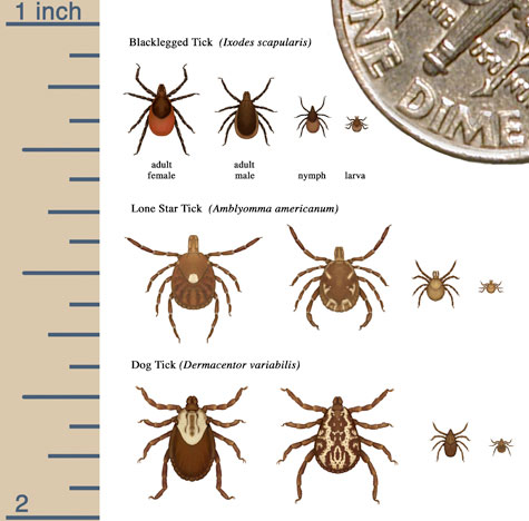 Avoid Ticks On and Off the Trail - Trailspace.com