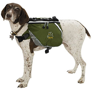 photo of a dog gear