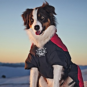 photo: D-Fa Puff-Doggy dog coat/vest