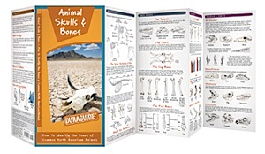 Waterford Press Duraguide Animal Skulls & Bones