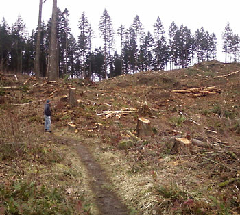 Clear-cut logging in the Columbia Cascades.